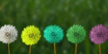 Değişimin Kodları: Algı, Duygu ve Davranış